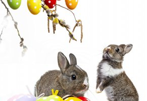 flowers,easter,spring,eggs,bunny,willow twig,decoration,rabbit
