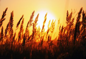 night,shine,wheat,sunset,autumn breeze,road,yellow,hot,nice,view,bright,leaf,beautiful,trees,breeze,sunny,flower,jungle,spring,awesome,leaves,cool,day,rise,autumn,forest,sun,summer,winter