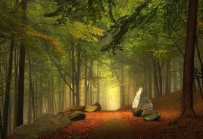 stone,paths,trees,forest